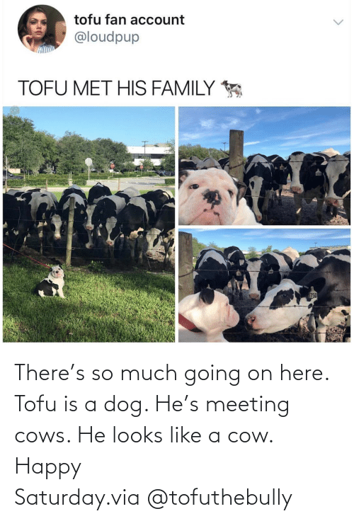 cow: There's so much going on here. Tofu is a dog. He's meeting cows. He looks like a cow. Happy Saturday.via @tofuthebully