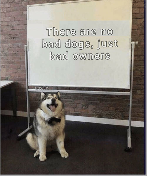 Bad, Dogs, and Just: There are no  bad dogs, just  bad owners