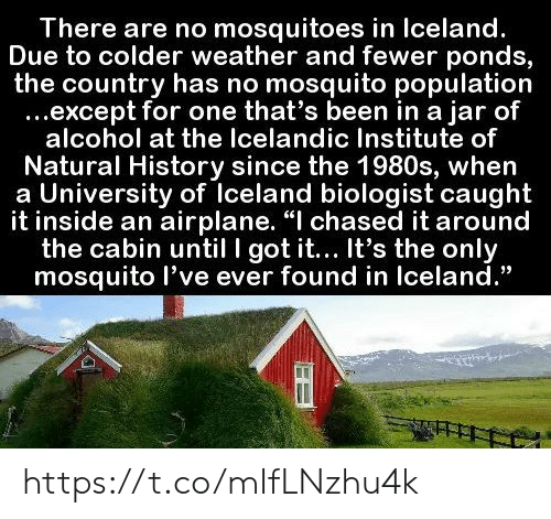 "Memes, Airplane, and Alcohol: There are no mosquitoes in Iceland.  Due to colder weather and fewer ponds,  the country has no mosquito population  ...except for one that's been in a jar of  alcohol at the Icelandic Institute of  Natural History since the 1980s, when  a University of Iceland biologist caught  it inside an airplane. ""I chased it around  the cabin until I got it... It's the only  mosquito l've ever found in Iceland."" https://t.co/mIfLNzhu4k"