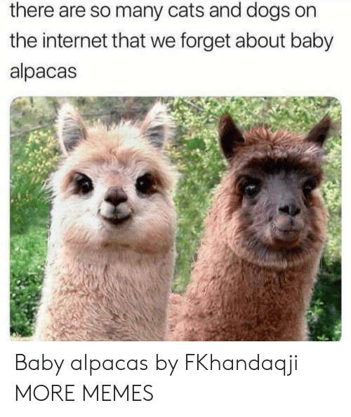 Cats, Dank, and Dogs: there are so many cats and dogs on  the internet that we forget about baby  alpacas Baby alpacas by FKhandaqji MORE MEMES