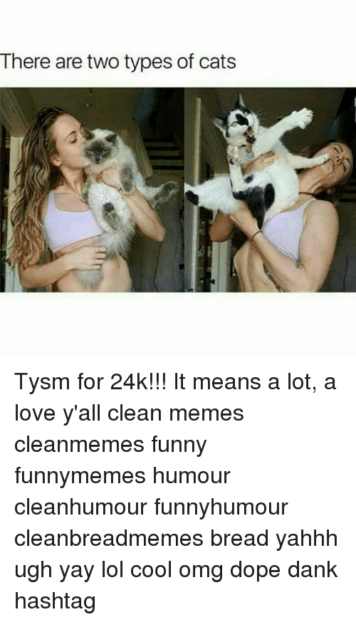 There Are Two Types Of Cats Tysm For 24k It Means A Lot A Love Y All Clean Memes Cleanmemes Funny Funnymemes Humour Cleanhumour Funnyhumour Cleanbreadmemes Bread Yahhh Ugh Yay Lol Cool Omg Omg yay cheezburger funny memes funny pictures. esmemes com