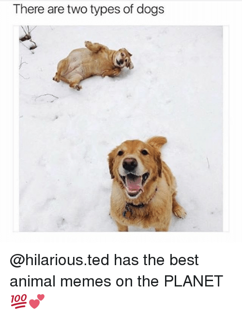 Best Animal Memes: There are two types of dogs @hilarious.ted has the best animal memes on the PLANET 💯💕