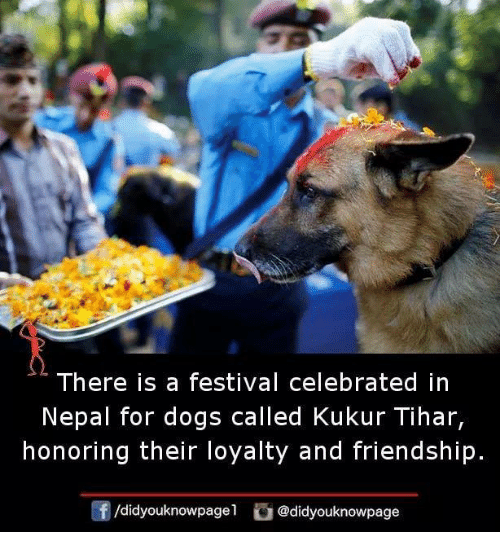 Dogs, Memes, and Nepal: There is a festival celebrated in  Nepal for dogs called Kukur Tihar,  honoring their loyalty and friendship.  /didyouknowpage1 @didyouknowpage