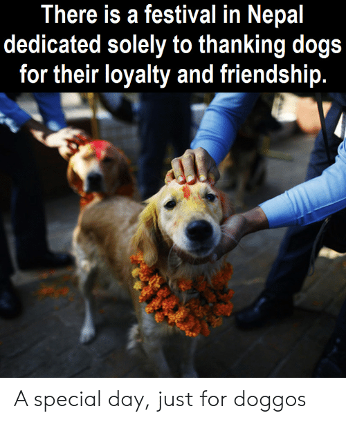 thanking: There is a festival in Nepal  dedicated solely to thanking dogs  for their loyalty and friendship. A special day, just for doggos