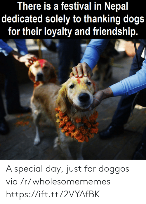thanking: There is a festival in Nepal  dedicated solely to thanking dogs  for their loyalty and friendship. A special day, just for doggos via /r/wholesomememes https://ift.tt/2VYAfBK