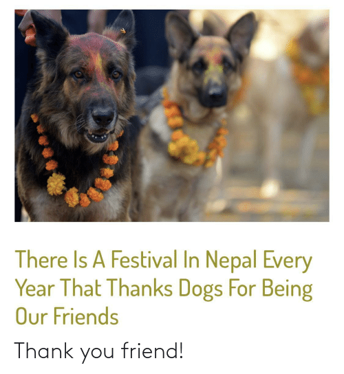Being: There Is A Festival In Nepal Every  Year That Thanks Dogs For Being  Our Friends Thank you friend!