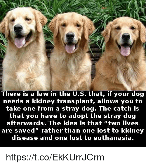 """Lost, Idea, and Dog: There is a law in the U.S. that, if your dog  needs a kidney transplant, allows you to  take one from a stray dog. The catch is  that you have to adopt the stray dog  are saved rather than one lost to kidney  afterwards. The idea is that """"two lives  are saved"""" rather than one lost to kidney  disease and one lost to euthanasia. https://t.co/EkKUrrJCrm"""