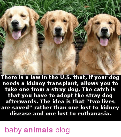 """Animals, Target, and Tumblr: There is a law in the U.S. that, if your dog  needs a kidney transplant, allows you to  take one from a stray dog. The catch is  that you have to adopt the stray dog  are saved"""" rather than one lost to kidney  disease and one lost to euthanasia. <p><a href=""""http://babyanimalgifs.tumblr.com/"""" target=""""_blank"""">baby <b>animals</b> blog</a></p>"""