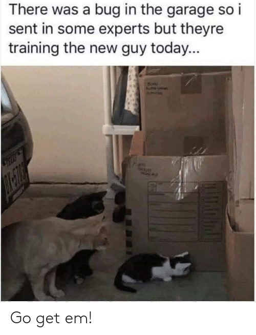 Experts: There was a bug in the garage so i  sent in some experts but theyre  training the new guy today...  LELLS  en Go get em!