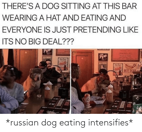 Alcohol: THERE'S A DOG SITTING AT THIS BAR  WEARING A HAT AND EATING AND  EVERYONE IS JUST PRETENDING LIKE  ITS NO BIG DEAL???  Tots  ALCOHOL!  Hat Dog!  ALCOHOL!  Hat Dog  HOT DOGS *russian dog eating intensifies*