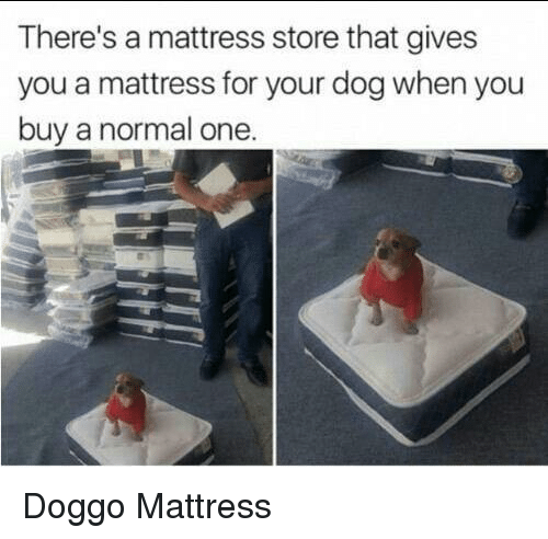 Mattress, Doggo, and Dog: There's a mattress store that gives  you a mattress for your dog when you  buy a normal one Doggo Mattress