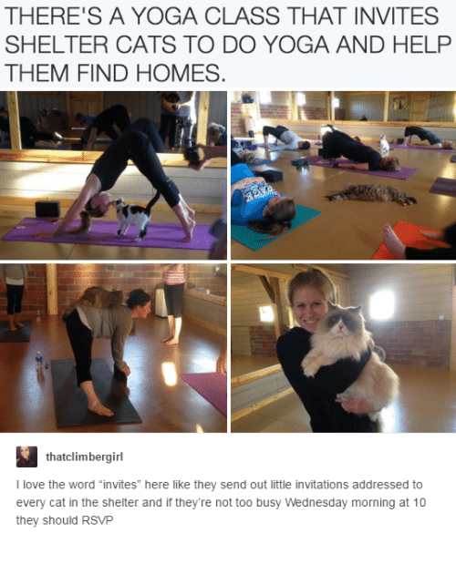 """invitations: THERE'S A YOGA CLASS THAT INVITES  SHELTER CATS TO DO YOGA AND HELP  THEM FIND HOMES  thatclimbergirl  I love the word """"invites"""" here like they send out little invitations addressed to  every cat in the shelter and if they're not too busy Wednesday morning at 10  they should RSVP"""