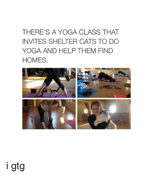 i gtg: THERE'S A YOGA CLASS THAT  INVITES SHELTER CATS TO DO  YOGA AND HELP THEM FIND  HOMES i gtg