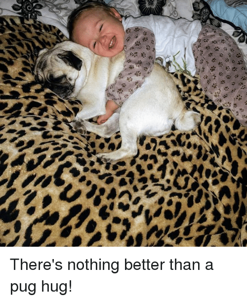 Pugged: There's nothing better than a pug hug!