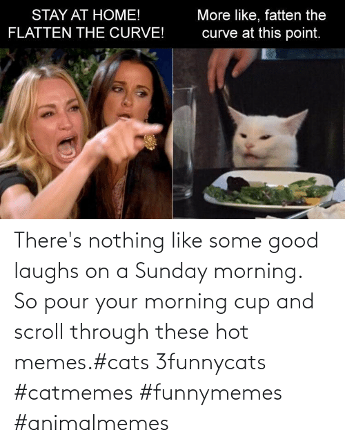 funnymemes: There's nothing like some good laughs on a Sunday morning.  So pour your morning cup and scroll through these hot memes.#cats 3funnycats #catmemes #funnymemes #animalmemes