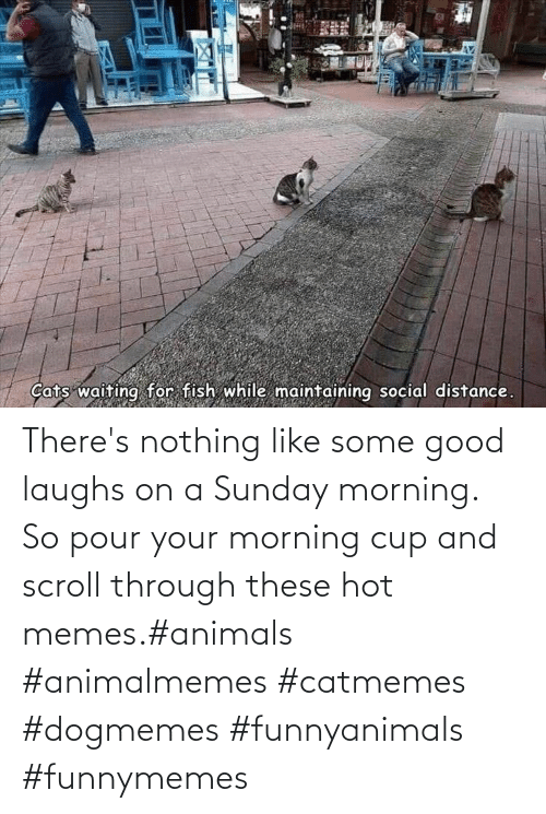 hot: There's nothing like some good laughs on a Sunday morning.  So pour your morning cup and scroll through these hot memes.#animals #animalmemes #catmemes #dogmemes #funnyanimals #funnymemes
