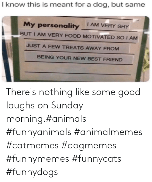 Sunday: There's nothing like some good laughs on Sunday morning.#animals #funnyanimals #animalmemes #catmemes #dogmemes #funnymemes #funnycats #funnydogs