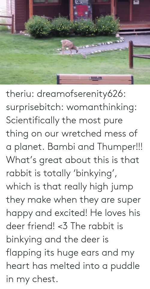 huge: theriu: dreamofserenity626:  surprisebitch:  womanthinking:  Scientifically the most pure thing on our wretched mess of a planet.  Bambi and Thumper!!!  What's great about this is that rabbit is totally 'binkying', which is that really high jump they make when they are super happy and excited! He loves his deer friend! <3  The rabbit is binkying and the deer is flapping its huge ears and my heart has melted into a puddle in my chest.