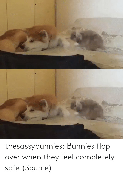 completely: thesassybunnies:  Bunnies flop over when they feel completely safe (Source)