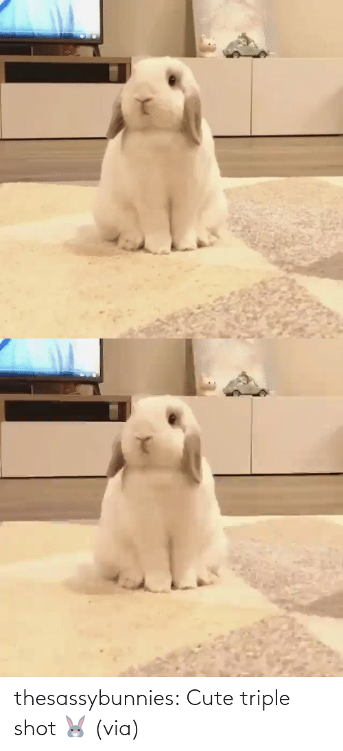 shot: thesassybunnies:  Cute triple shot 🐰 (via)