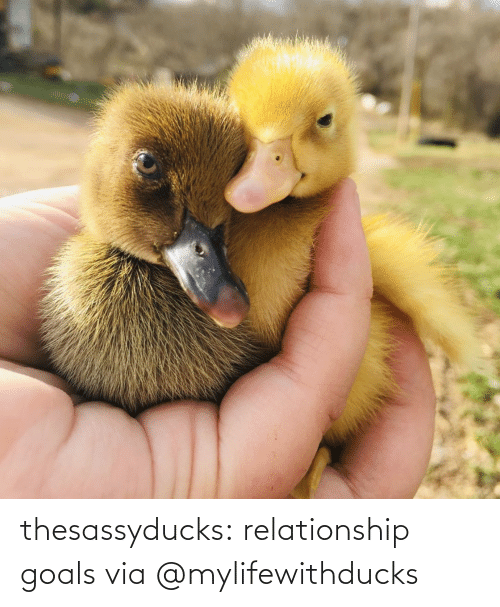 Instagram: thesassyducks: relationship goals via @mylifewithducks