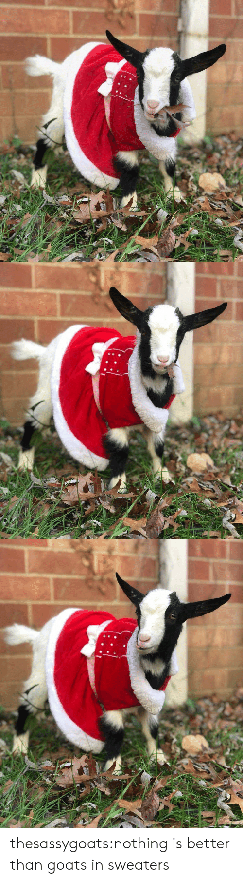 sweaters: thesassygoats:nothing is better than goats in sweaters