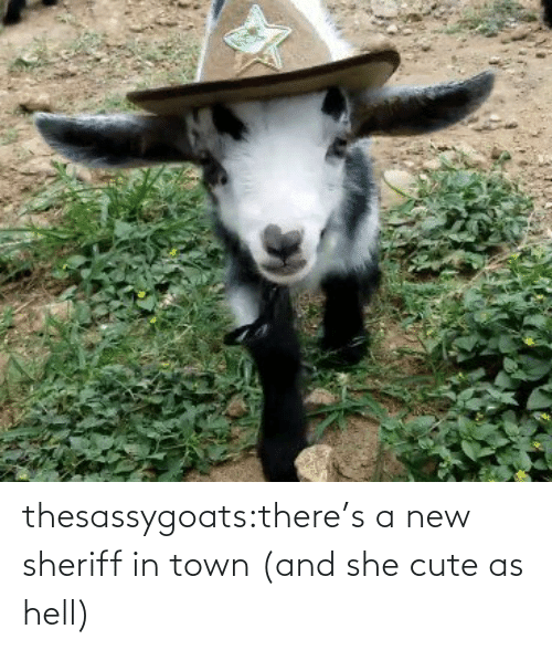 A Href: thesassygoats:there's a new sheriff in town (and she cute as hell)