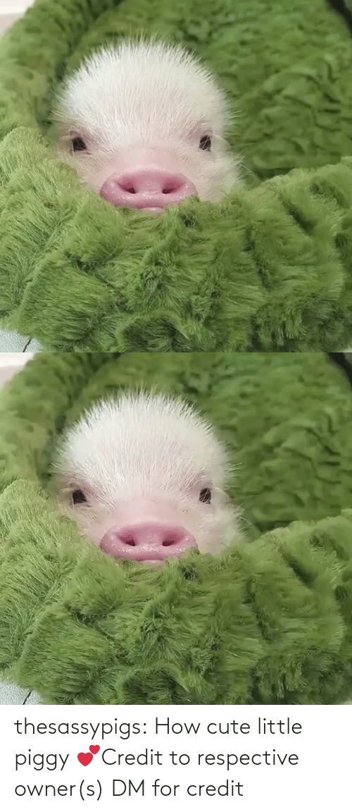 Credit: thesassypigs:  How cute little piggy💕Credit to respective owner(s) DM for credit