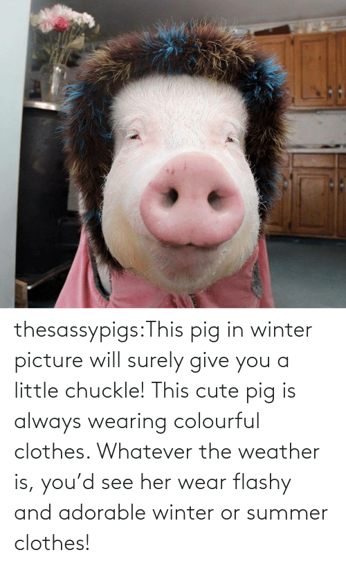 will: thesassypigs:This pig in winter picture will surely give you a little chuckle! This cute pig is always wearing colourful clothes. Whatever the weather is, you'd see her wear flashy and adorable winter or summer clothes!
