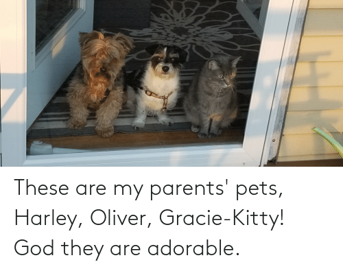 Harley: These are my parents' pets, Harley, Oliver, Gracie-Kitty! God they are adorable.
