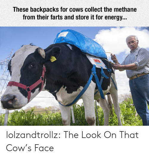 Energy, Tumblr, and Blog: These backpacks for cows collect the methane  from their farts and store it for energy... lolzandtrollz:  The Look On That Cow's Face