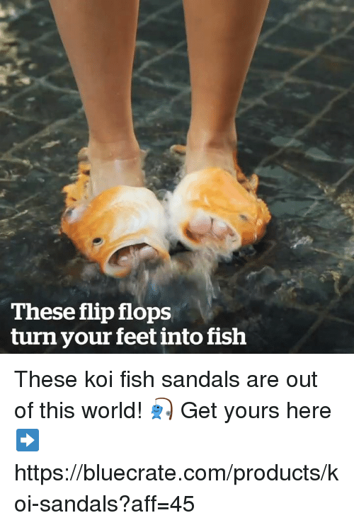 Grumpy Cat, Fish, and Sandals: These flip flops  turn your feet into fish These koi fish sandals are out of this world! 🎣   Get yours here ➡️ https://bluecrate.com/products/koi-sandals?aff=45