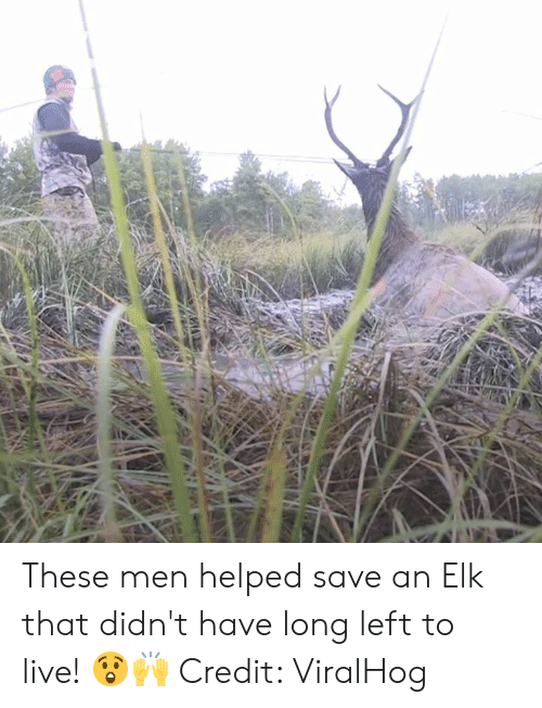 Live, Elk, and Men: These men helped save an Elk that didn't have long left to live! 😲🙌  Credit: ViralHog