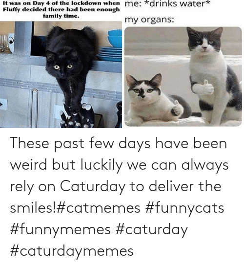 Smiles: These past few days have been weird but luckily we can always rely on Caturday to deliver the smiles!#catmemes #funnycats #funnymemes #caturday #caturdaymemes