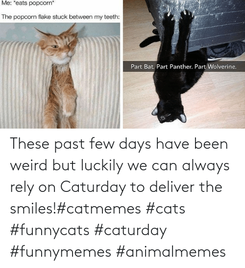 Smiles: These past few days have been weird but luckily we can always rely on Caturday to deliver the smiles!#catmemes #cats #funnycats #caturday #funnymemes #animalmemes
