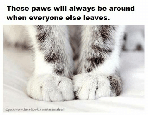 Alwaysed: These paws will always be around  when everyone else leaves.  https://www.facebook.com/animalsalll  ps://www.Tacebook.com/animalsa