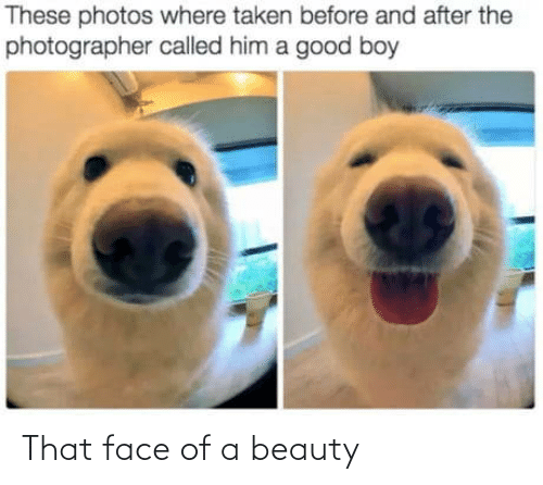 before and after: These photos where taken before and after the  photographer called him a good boy That face of a beauty