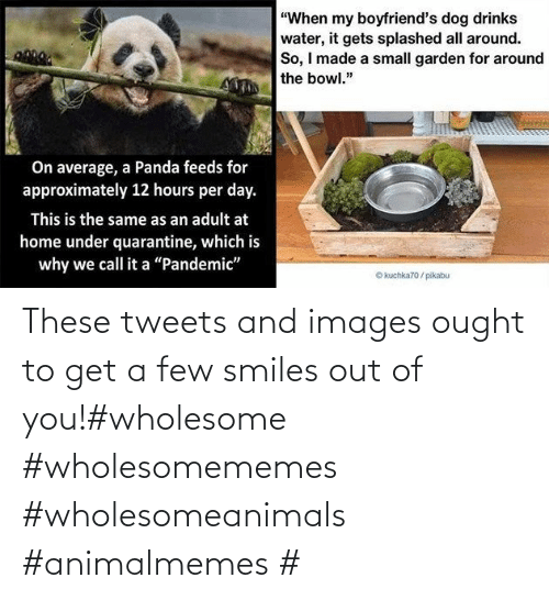 Smiles: These tweets and images ought to get a few smiles out of you!#wholesome #wholesomememes #wholesomeanimals #animalmemes #