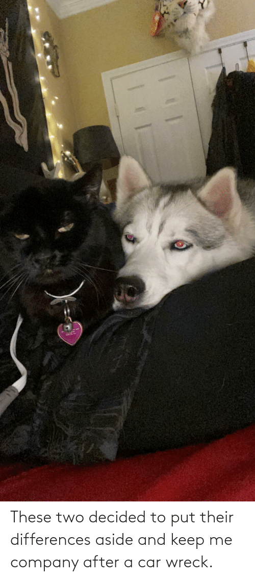 wreck: These two decided to put their differences aside and keep me company after a car wreck.