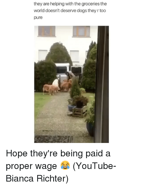 Dogs, Memes, and youtube.com: they are helping with the groceries the  world doesn't deserve dogs they r too  pure Hope they're being paid a proper wage 😂 (YouTube- Bianca Richter)