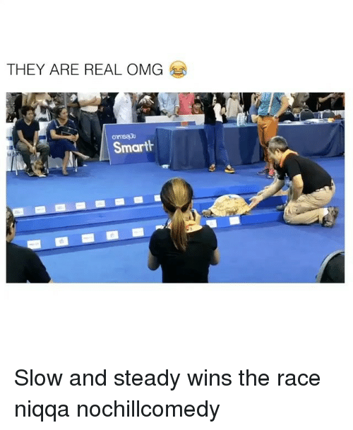 steady-wins-the-race: THEY ARE REAL OMG  Smart Slow and steady wins the race niqqa nochillcomedy