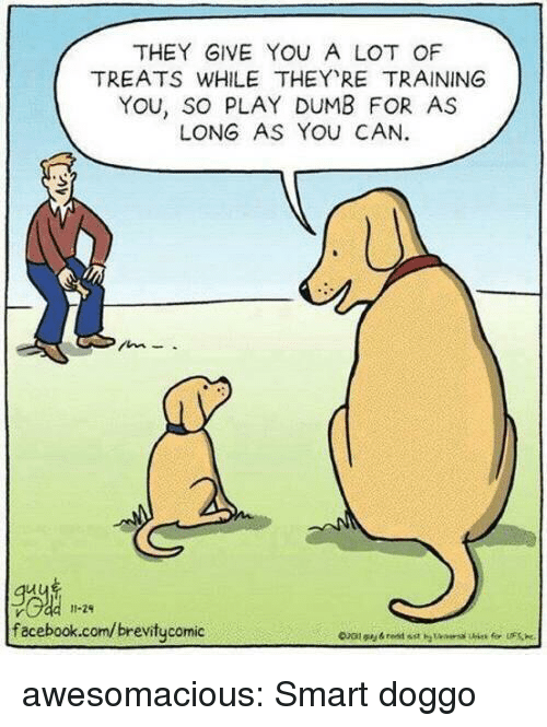 Dumb, Facebook, and Tumblr: THEY GIVE YOU A LOT OF  TREATS WHILE THEY RE TRAINING  YOU, SO PLAY DUMB FOR AS  LONG AS YOu CAN.  Je  facebook.com/brevitycomic  11-29 awesomacious:  Smart doggo