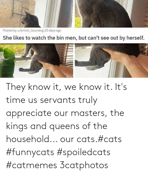they know: They know it, we know it. It's time us servants truly appreciate our masters, the kings and queens of the household... our cats.#cats #funnycats #spoiledcats #catmemes 3catphotos