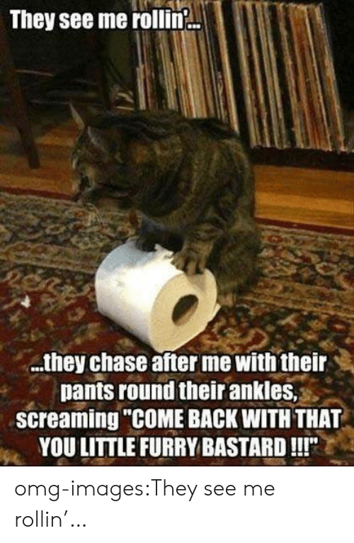 """Omg, Tumblr, and Blog: They see me rollin.  .tney Chase ater me witn their  pants round their ankles,  screaming """"COME BACK WITH THAT  YOULITTLE FURRY BASTARD!!!"""" omg-images:They see me rollin'…"""