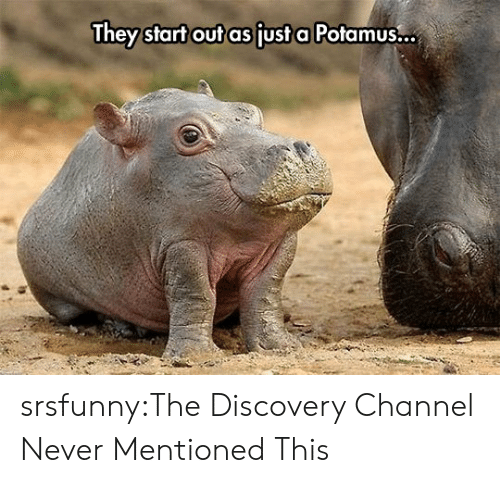 discovery channel: They start out as fust a Potamus... srsfunny:The Discovery Channel Never Mentioned This