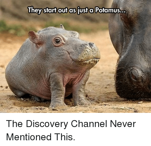 discovery channel: They start outas just a Potamus.. <p>The Discovery Channel Never Mentioned This.</p>