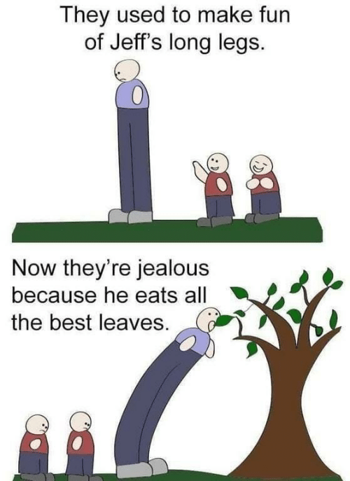Eats: They used to make fun  of Jeff's long legs.  Now they're jealous  because he eats all  the best leaves.