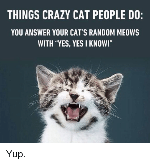 """Cats, Crazy, and Memes: THINGS CRAZY CAT PEOPLE DO:  YOU ANSWER YOUR CAT'S RANDOM MEOWS  WITH """"YES, YES I KNOW!"""" Yup."""