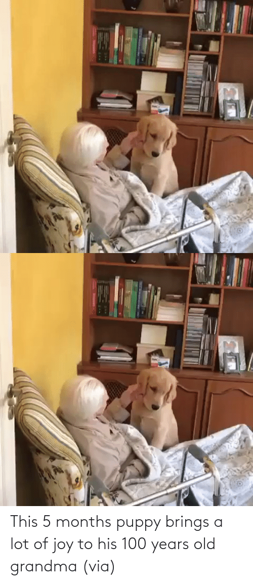 Puppy: This 5 months puppy brings a lot of joy to his 100 years old grandma (via)