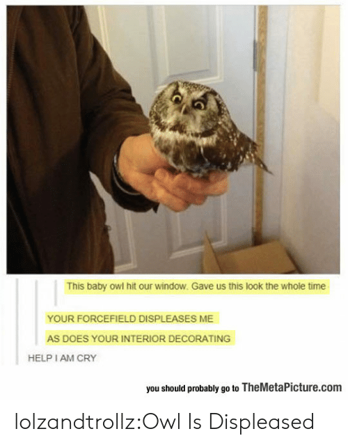the whole time: This baby owl hit our window. Gave us this look the whole time  YOUR FORCEFIELD DISPLEASES ME  AS DOES YOUR INTERIOR DECORATING  HELP I AM CRY  you should probably go to TheMetaPicture.com lolzandtrollz:Owl Is Displeased